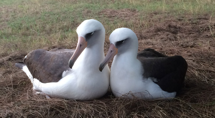 A Little About the Albatross