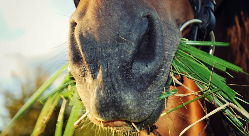 Holistic Pet Care: Horse Lovers Love Noni Products