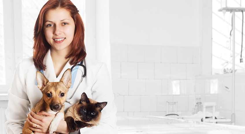 Your Pet's Best Friend? A Holistic Approach to Pet Care