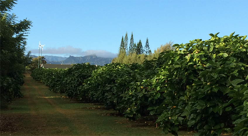 Why Does Organic Matter to Hawaiian Organic Noni?