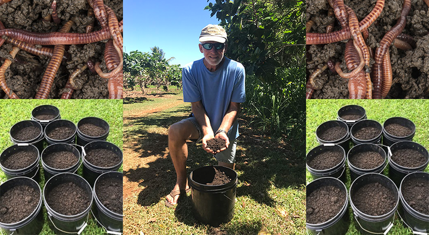 Let the Worms do the Work - Sustainable Farming at Hawaiian Organic Noni