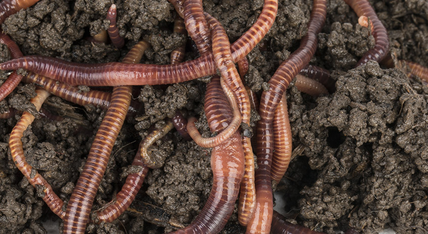 An Intro to Vermicomposting