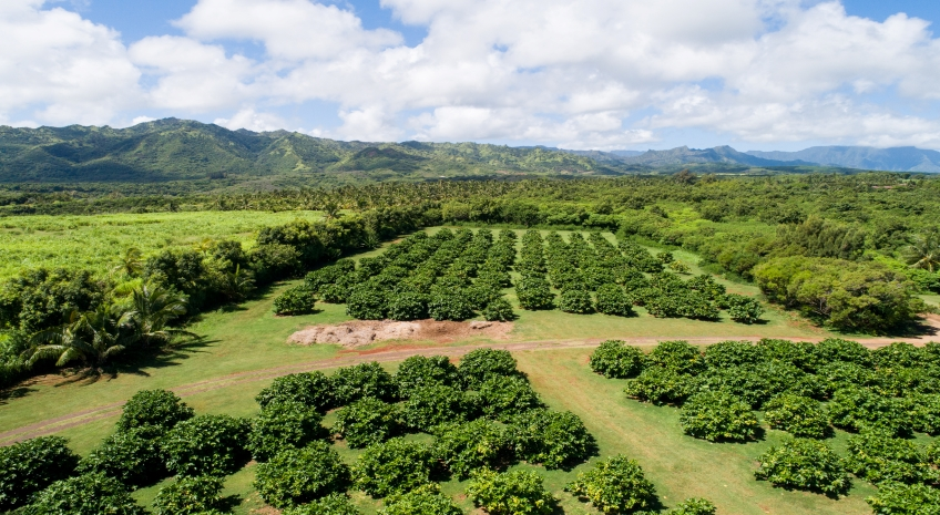 Free Organic Noni Farm and Wellness Tour - A Walk Through