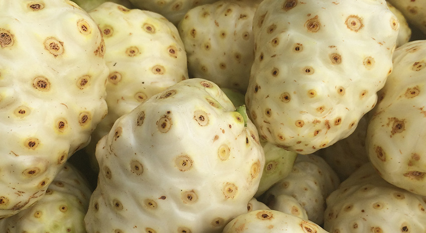 Raw noni Food Diet