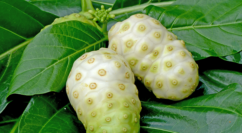 Why Noni is a Superfood