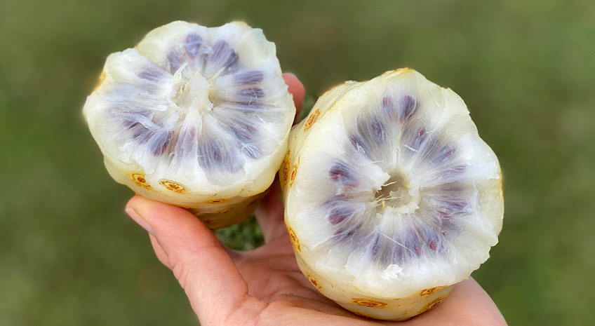 Why Raw Noni Fruit and not Noni Juice