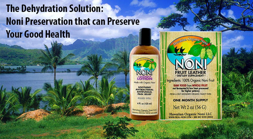 The Dehydration Solution: Noni Preservation that can Preserve Your Good Health