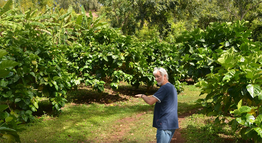 Three Decades and Counting – The Hawaiian Organic Noni Farm and the Healing Sensation of Noni